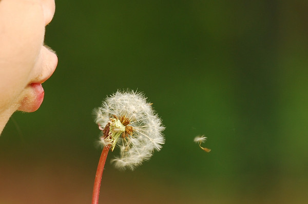 Camila with Dandelion